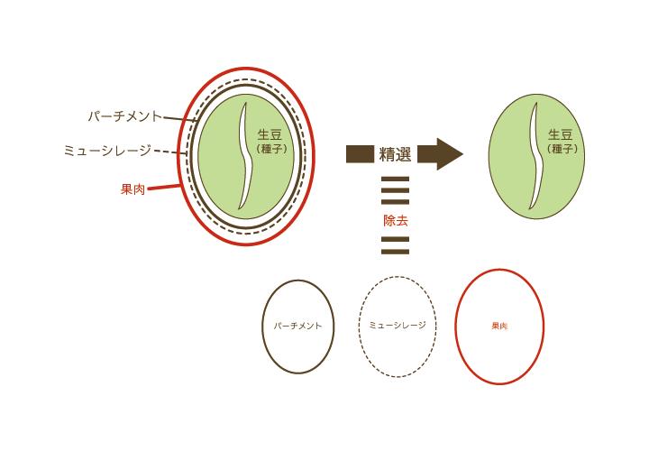コーヒーの生豆をつくる工程