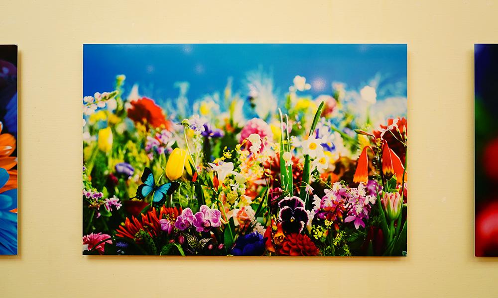 熊本現代美術館 蜷川実花展 -虚構と現実の間に- さくら
