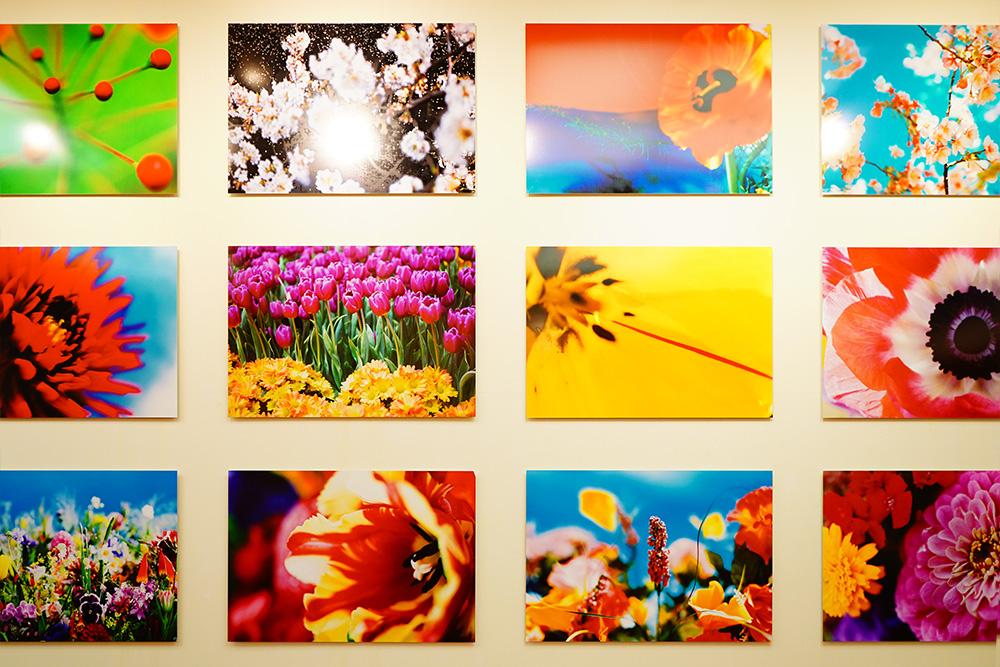 熊本現代美術館 蜷川実花展 -虚構と現実の間に- 永遠の花
