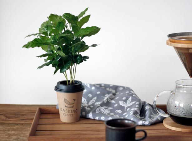 バスキングコーヒー Things can change コーヒーの木