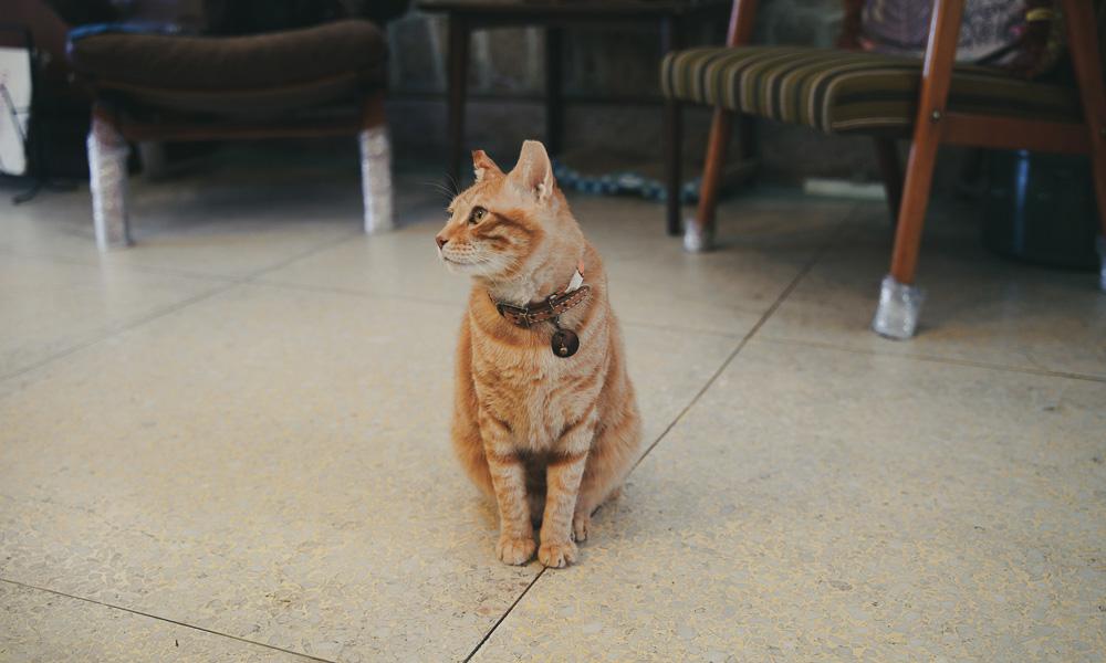 台北 ホテル OrigInn Space 大稻埕 猫
